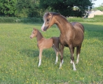 Foal number 6!