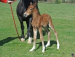Our first foal of 2014