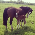 Second foal at Ringside