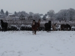 Ponies in the snow!