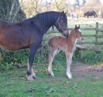 The first foal of 2013